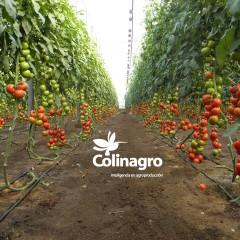 Colinagro